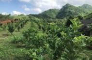 Chuyển nhượng 317 ha đất tại tỉnh hòa bình