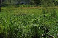 Bán đất ở ngã tư gò mây quận Bình Tân